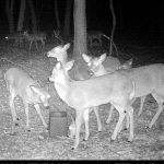 Can Deer See Trail Camera Flash?